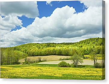 Spring Farm Landscape And Blue Sky In Maine Canvas Print