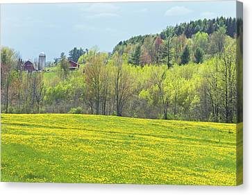 Spring Farm Landscape With Dandelion Bloom In Maine Photograph Canvas Print by Keith Webber Jr