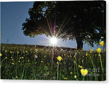 Spring Field Canvas Print by Bruno Santoro