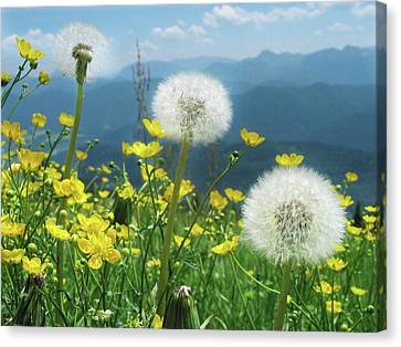 Spring Flower Meadow With Mountain Canvas Print