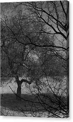 Spring For Leaves  Canvas Print by Jerry Cordeiro