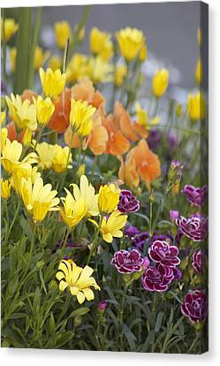 Canvas Print featuring the photograph Spring  Garden by Sylvia Hart