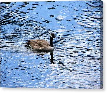 Canvas Print featuring the photograph Spring Goose by Wendy McKennon