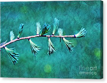 Spring Has Sprung Canvas Print by Aimelle