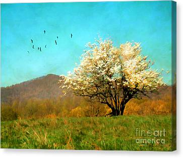 Spring In The Mountains Canvas Print by Darren Fisher