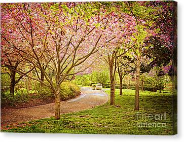 Canvas Print featuring the photograph Spring In The Park by Cheryl Davis
