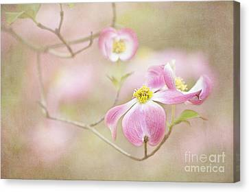 Canvas Print featuring the photograph Spring Inspiration by Cheryl Davis