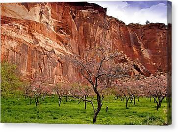 Spring In Utah Canvas Print by Jean Noren