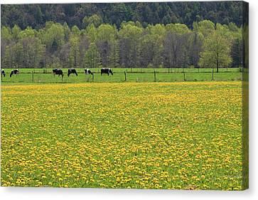 Spring Meadow Flowers Canvas Print by John Stephens