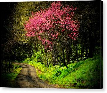 Spring Mountain Road Canvas Print by Michael L Kimble