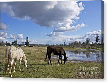 Sean Horse Canvas Print - Spring Pasture by Sean Griffin