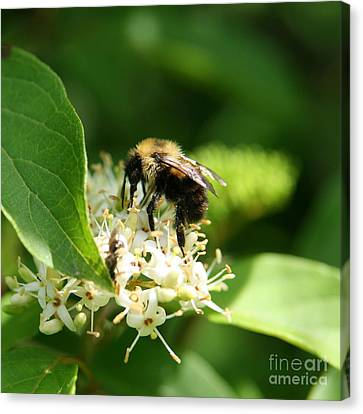 Spring Pollination Canvas Print by Neal Eslinger