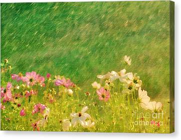 Spring Rain Canvas Print by Darren Fisher