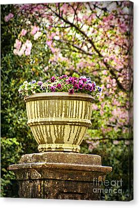 Canvas Print featuring the photograph Spring Showers by Cheryl Davis