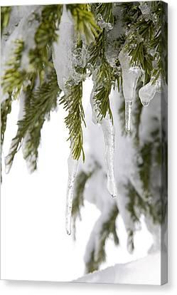 Spring Snow, Tree Canvas Print