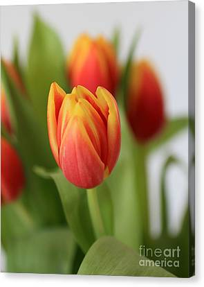 Spring Tulips Canvas Print by Ursula Lawrence