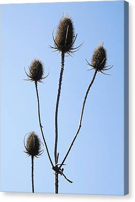 Canvas Print featuring the photograph Spring Weeds 1 by Gerald Strine