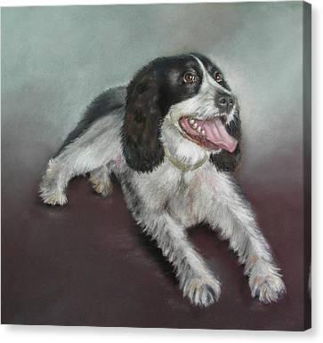 Springer Spaniel Canvas Print