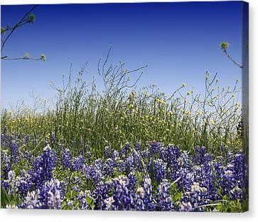 Canvas Print featuring the photograph Springtime Bluebonnets by Lynnette Johns