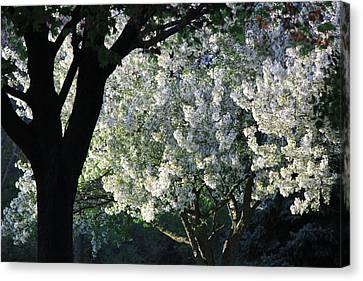 Springtime In Wisconsin Canvas Print by James Hammen