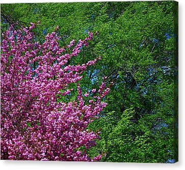 Pink Blossoms Canvas Print - Springtime by Lisa Phillips