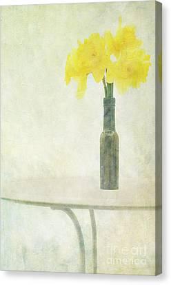 Daffodils Canvas Print - Springtime by Marion Galt