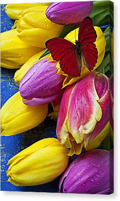 Springtime Tulips And Red Butterfly Canvas Print by Garry Gay