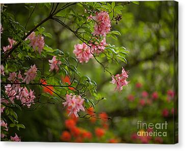 Sprinkled Amongst Canvas Print by Mike Reid