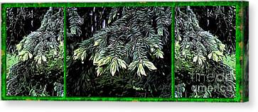 Spruce Canvas Print by Ron Bissett