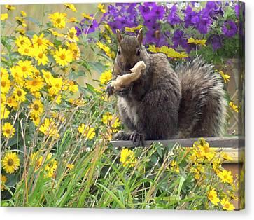 Squirrel   Canvas Print by Amalia Jonas