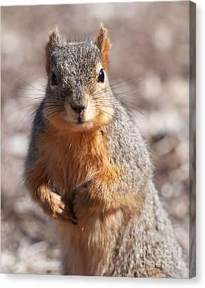 Squirrel Canvas Print by Art Whitton