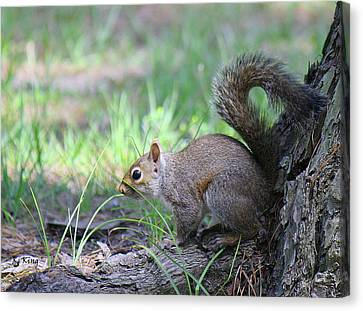 Canvas Print featuring the photograph Squirrel Hiding In The Grass by Roena King