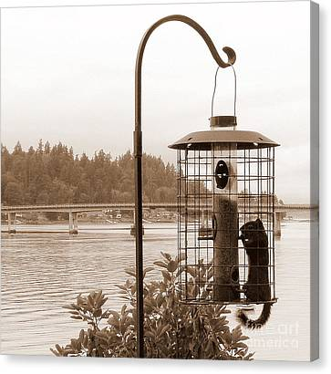 Squirrel In A Squirrel-proof Bird Feeder Canvas Print by Tanya  Searcy