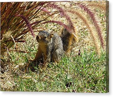 Squirrel In The Grass Canvas Print