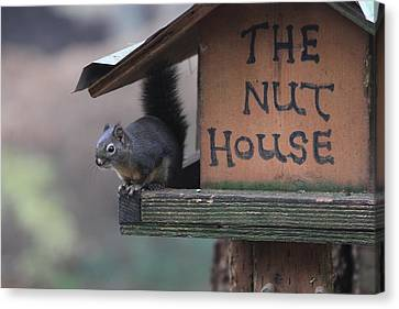 Squirrel In The Nut House Canvas Print by Sam Amato