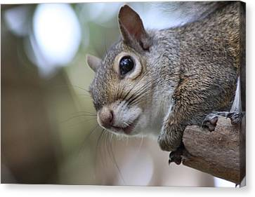 Squirrel Canvas Print by Jeanne Andrews