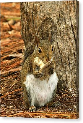 Squirrel On Shrooms Canvas Print
