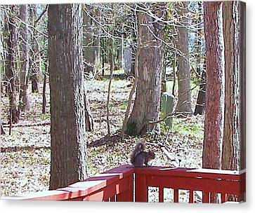 Canvas Print featuring the photograph Squirrel Waiting by Pamela Hyde Wilson