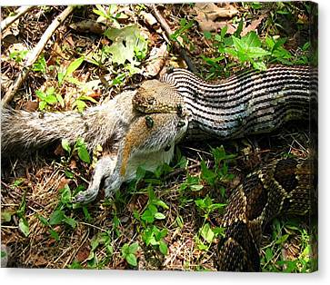 Canvas Print featuring the photograph Squirrel's End by Doug McPherson