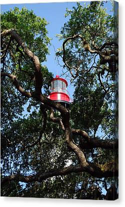 St Augustine Tree House Canvas Print by Skip Willits