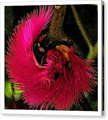 Canvas Print featuring the photograph St Kitts Flora by Cindy Manero