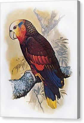 St Vincent Amazon Parrot Canvas Print by Granger