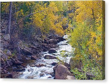 St Vrain Canyon And River Autumn Season Boulder County Colorado Canvas Print by James BO  Insogna