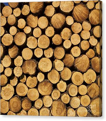 Woodpile Canvas Print - Stack Of Wood Logs. by Bernard Jaubert