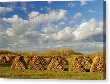Stacked Hay Bales In Field, Selkirk Canvas Print by Dave Reede