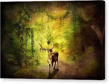 Stag Canvas Print by Svetlana Sewell