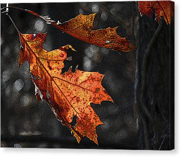 Canvas Print featuring the photograph Stained Glass In The Forest Cathedral by William Fields