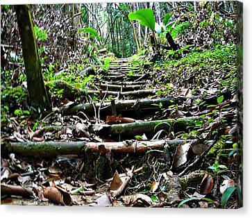 Canvas Print - Stairs In The Forest by Jenny Senra Pampin