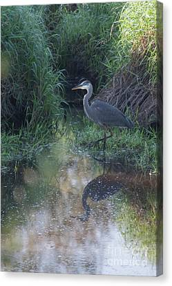 Stalking Canvas Print by Rod Wiens