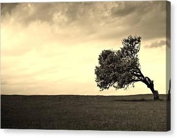 Stand Alone Tree 1 Canvas Print by Sumit Mehndiratta